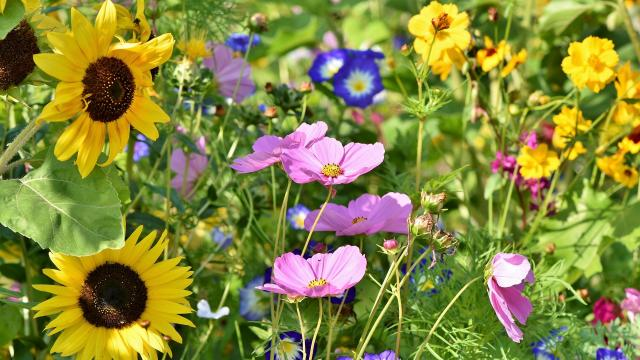 flower-meadow-3598555-1920.jpg