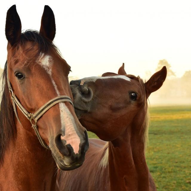 horses-3747374-1920.jpg