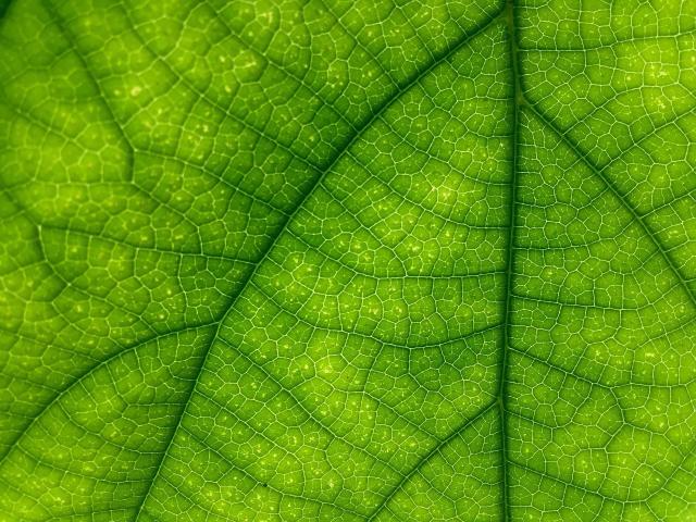 leaf-1209927-1920.jpg