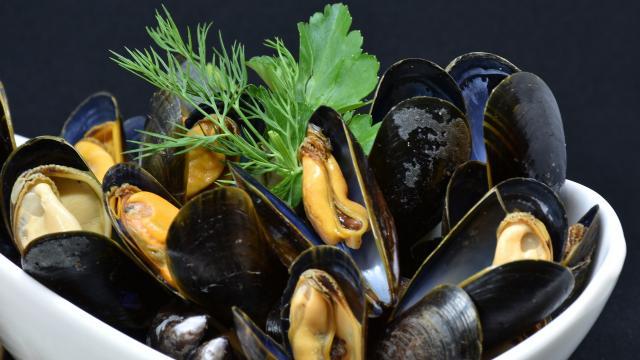 mussels-3148429-1920.jpg