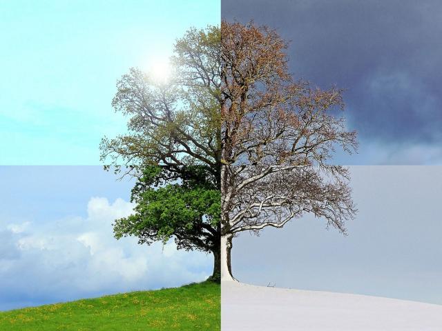 seasons-of-the-year-1127760-1280.jpg