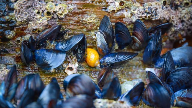 mussels-1827673-1920.jpg
