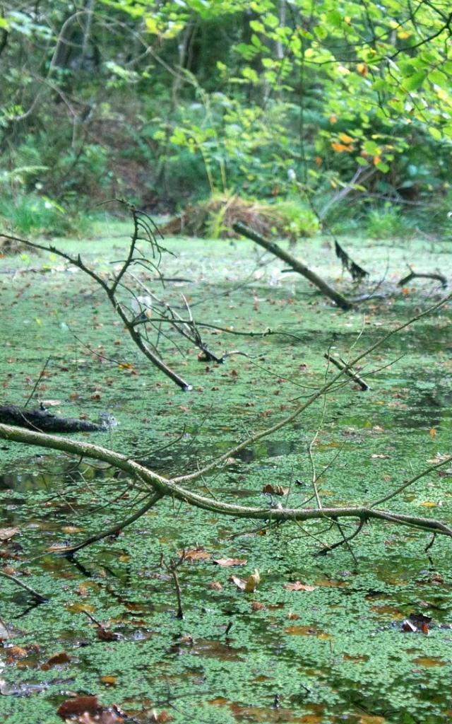 Swamp 470485 1920