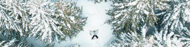 Promenade dans les sapins une personne se jette dans la neige fraîche dans la station des 2 Alpes
