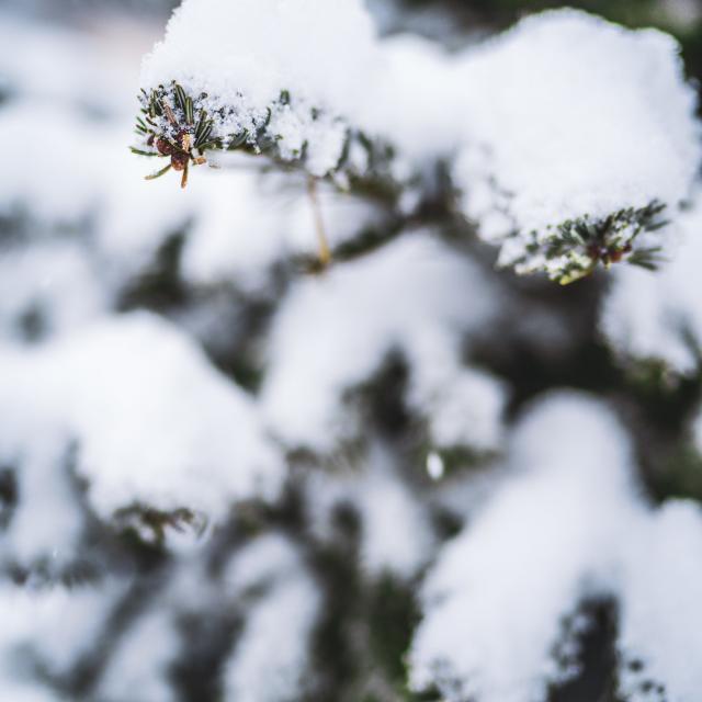 hiver neige sapin les2 alpes logement