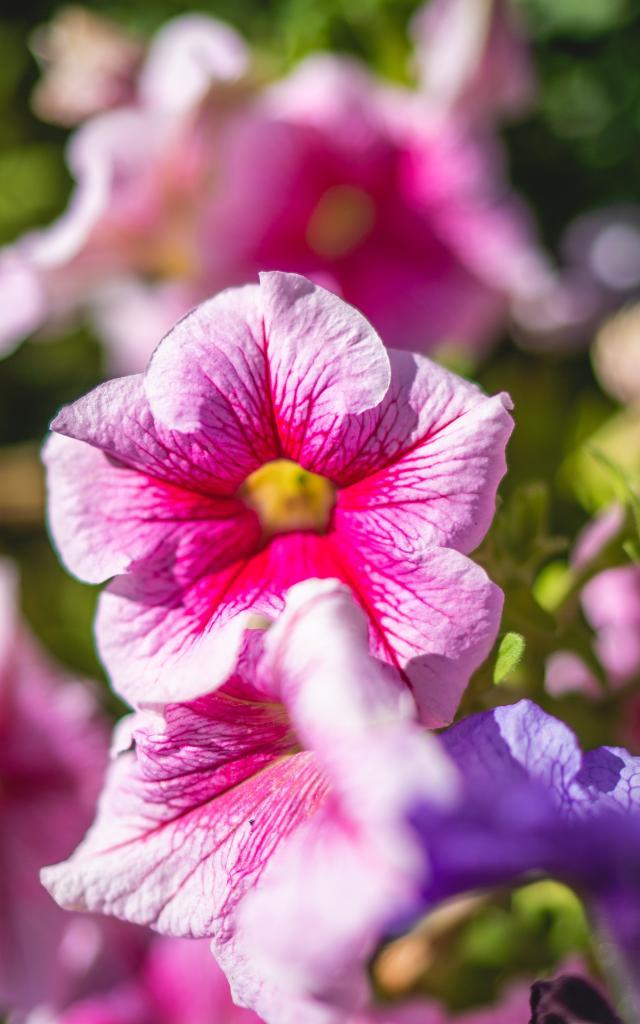 Fleurs Été