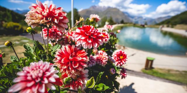 Lac Buissonnière Été Fleurs