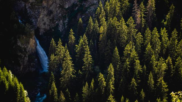 Sapins Cascade Paysage Été