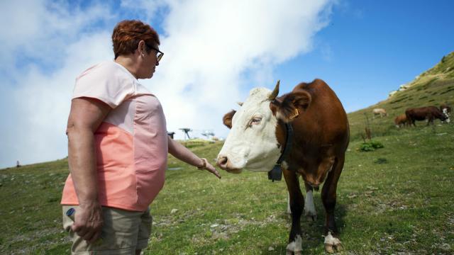 vache aux 7 Laux en été