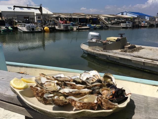 Dégustation d'huîtres de Leucate
