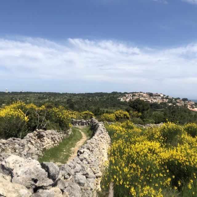 Plateau Leucate Nature