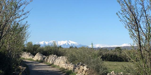 Randonnée hivernale - Plateau de Leucate