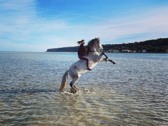 Instagram #leucate cheval