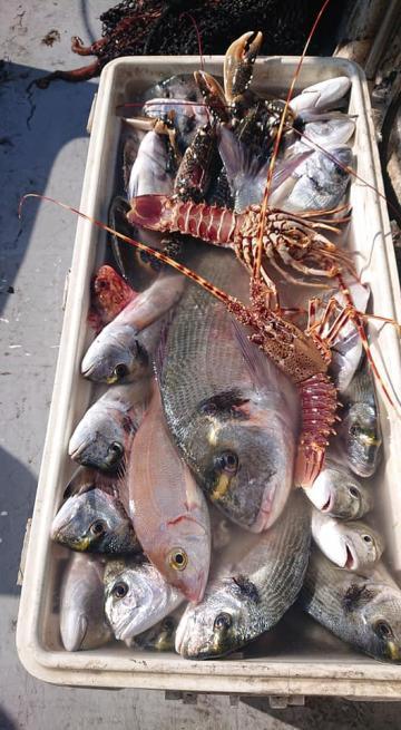 Quai Pêcheurs Poisson Peche Leucate