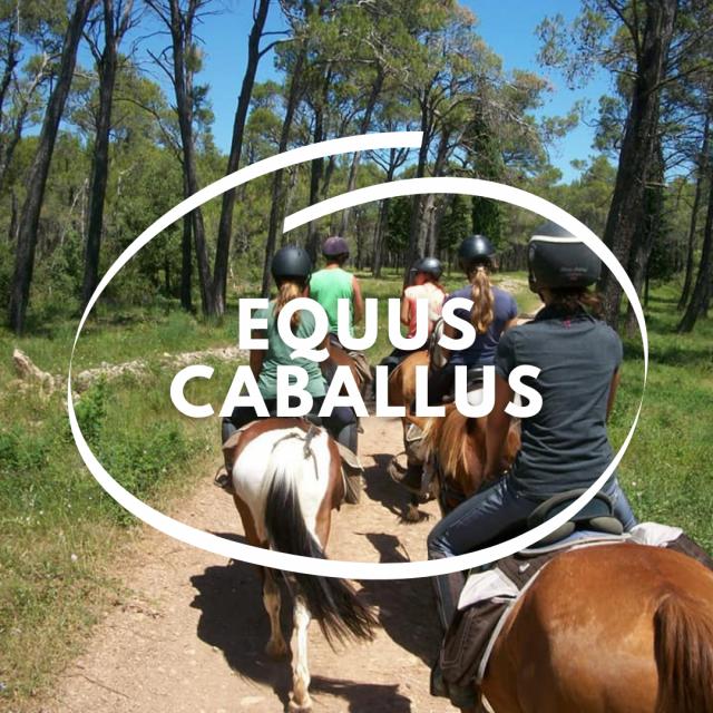 Capsule Equus Caballus