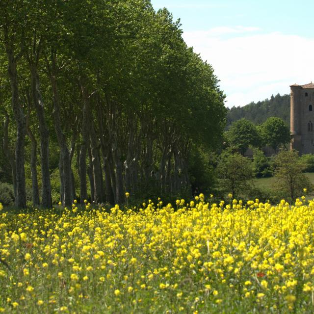 Château D'arques Paysage