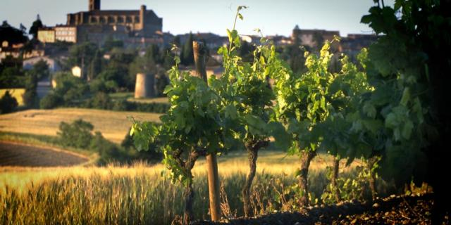 Vins Malepere