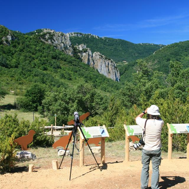 Observatoire Aux Vautours Touristes Buagarach