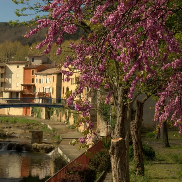 Rivière Sals Village Rennes Les Bains
