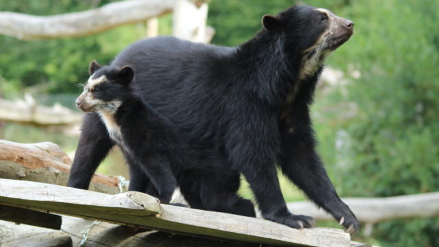 Parc Zoologique Cerza Ours