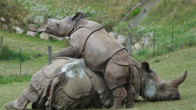 Parc Zoologique Cerza Rhinoceros