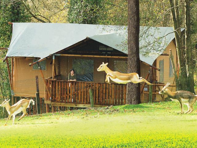 tentes-safari-cerzasitezoologiquecerza.jpg