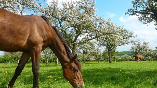 Cheval Loic Durand Calvados Attractivite