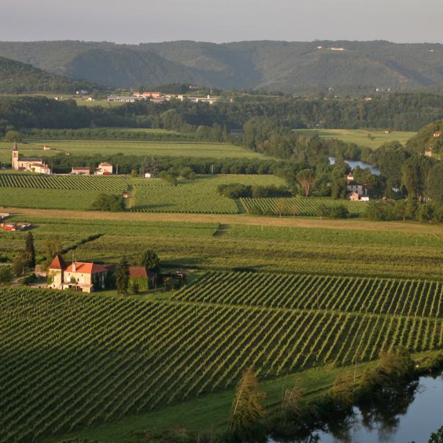 Vignoble à Parnac