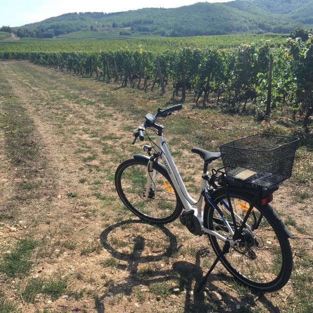 A Velo Dans Les Vignes 5cc Seguy Lot Tourisme