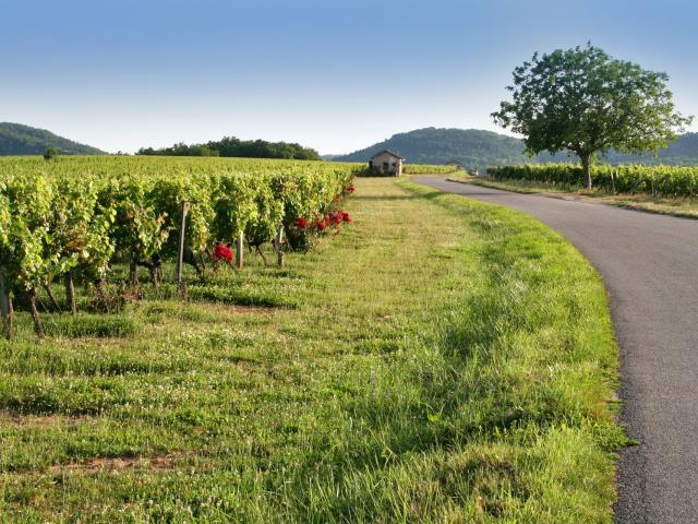 Dans le vignoble de Cahors