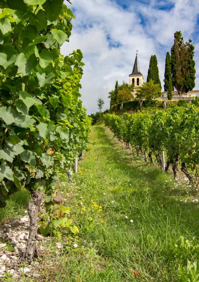 Eglise Saint-Etienne et ses vignes