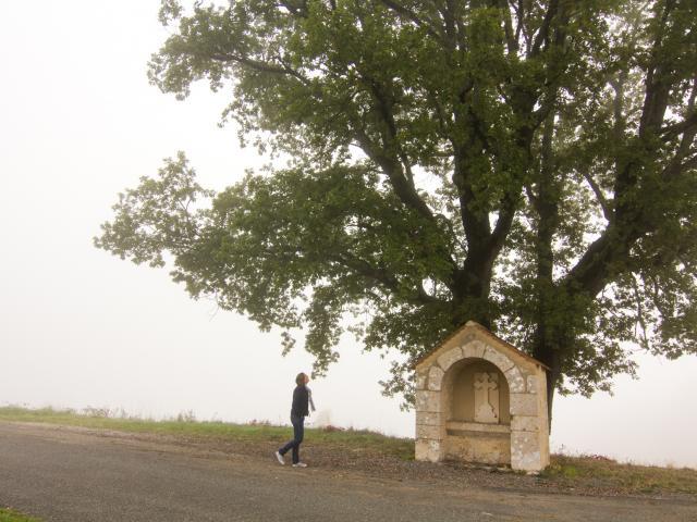 Grand Chêne à Cambayrac