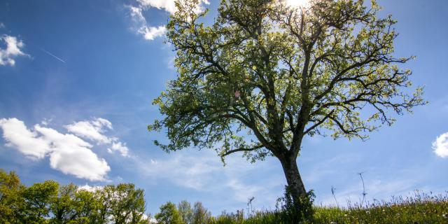 L'arbre isolé près du Lac de Bannac