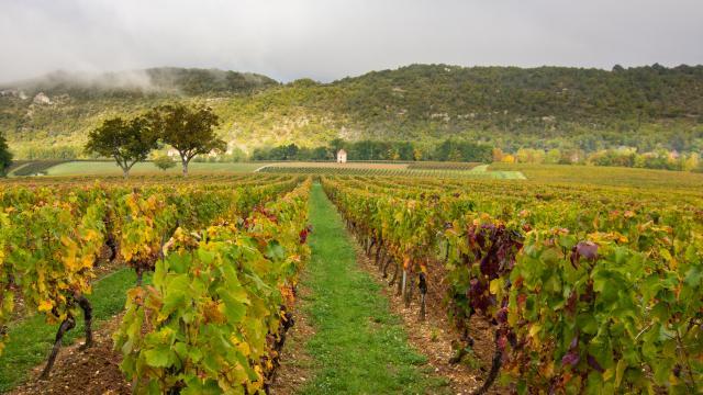 Maison de vignes à Albas