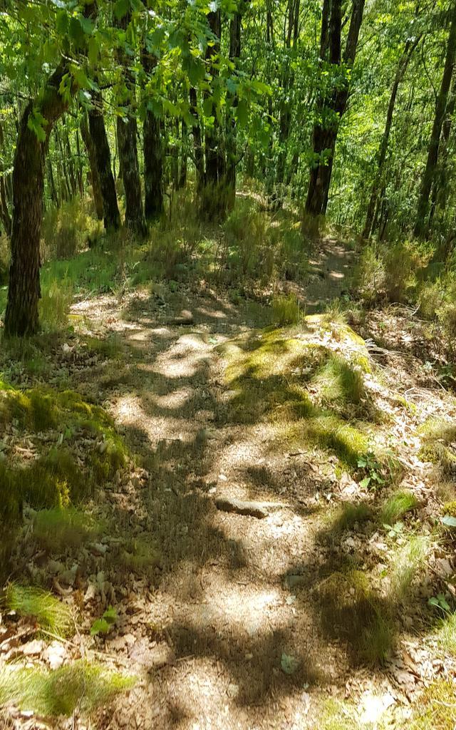 Sentier vers le Saut de Vieyres