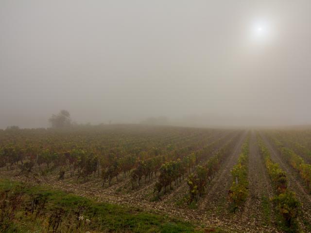 Vignes dans la brume à Trespoux-Rassiels