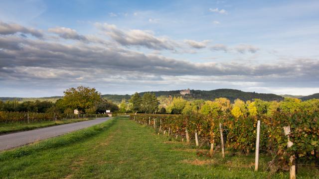 Vignes et Château de Mercuès