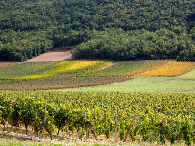 Vignoble de Cahors en automne