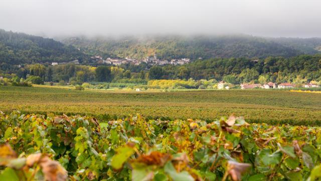 Vue d'Albas depuis les vignes