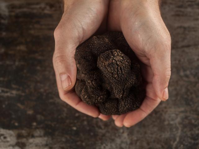 Truffe Noire du Quercy