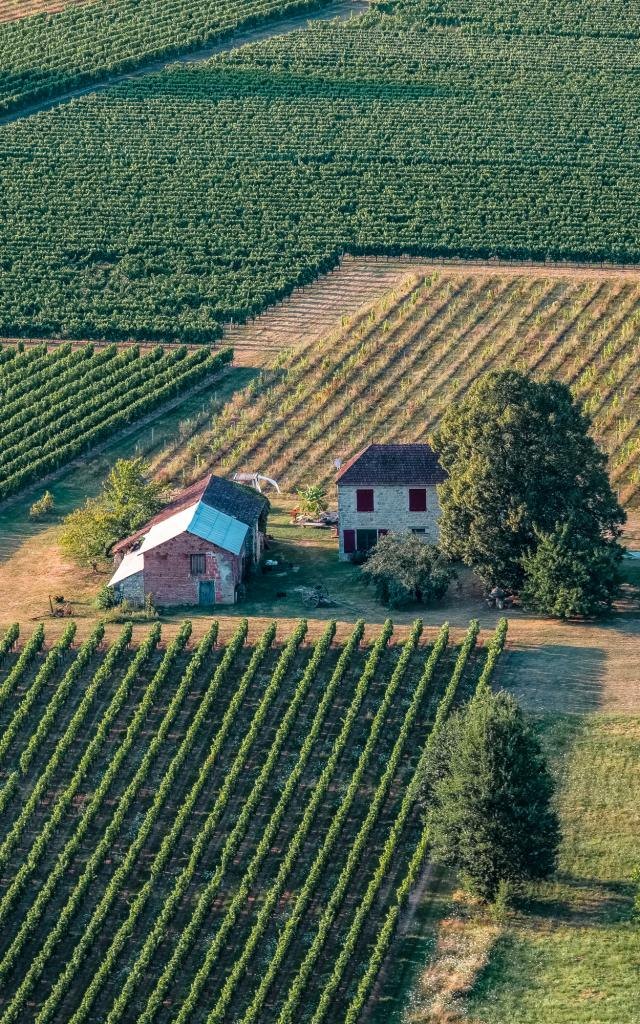 Vignoble de Cahors à Bélaye