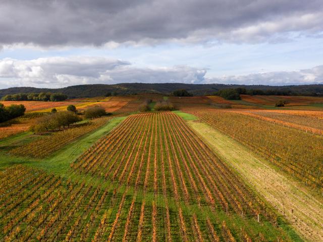 Vignoble de Cahors en automne à Mercuès
