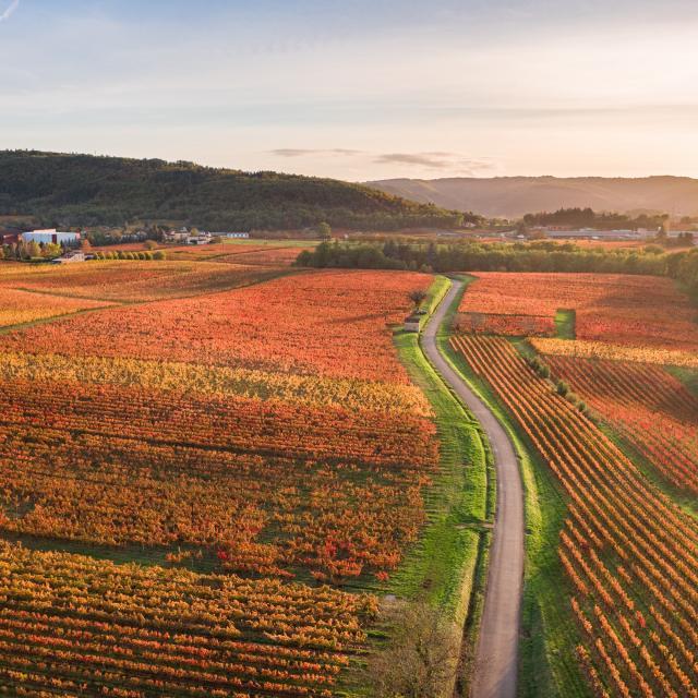Vignoble de Cahors en automne à Parnac