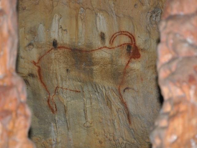 Bouquetins - Grotte de Cougnac