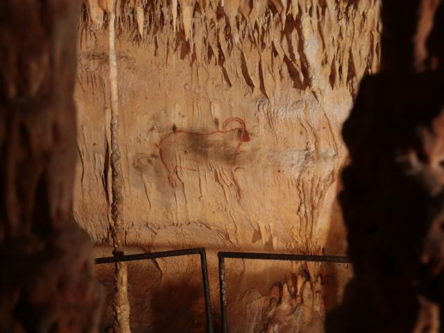 Bouquetins - Grottes de Cougnac