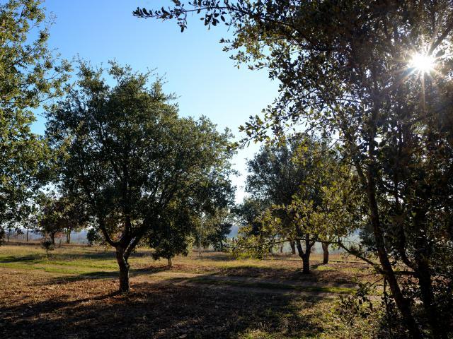 Truffière à Cuzance