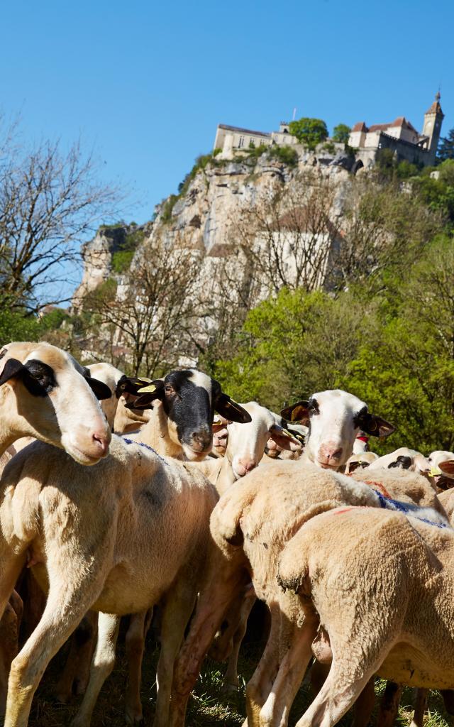 Etape de la tranhsumance en Quercy - Rocamadour