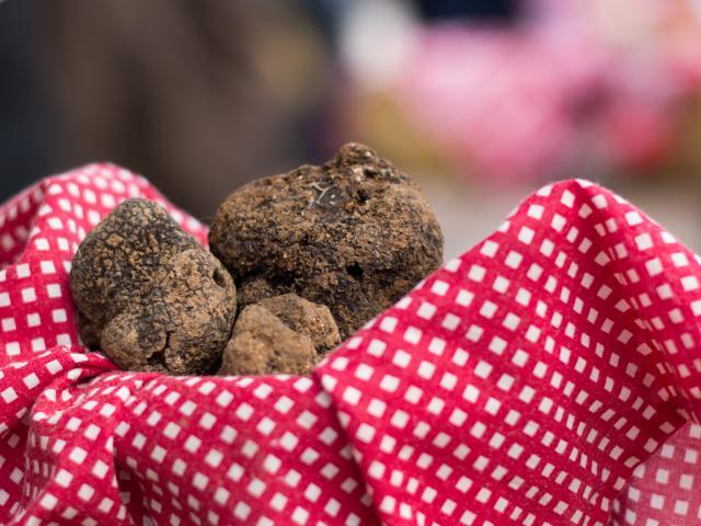 Au Marché aux truffes à Lalbenque