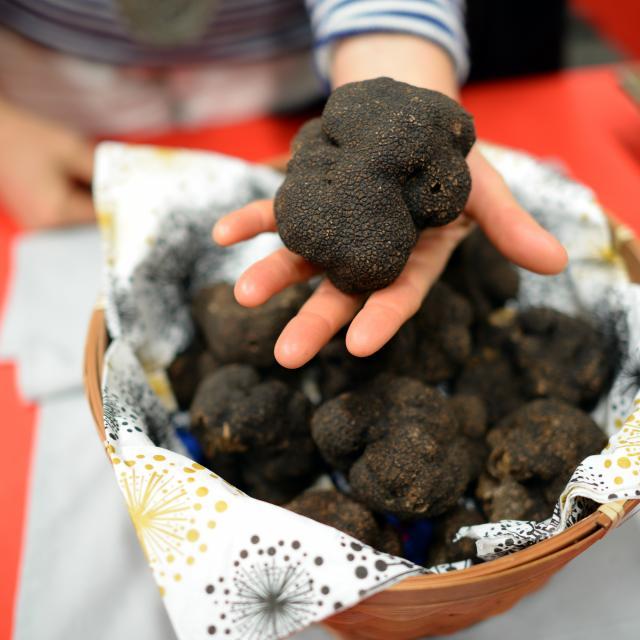 Truffe exceptionnelle - marché aux truffes de Cuzance
