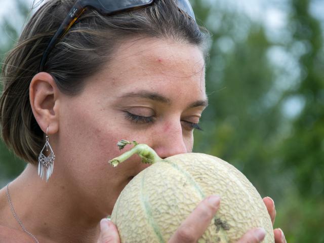 Découverte du melon du Quercy